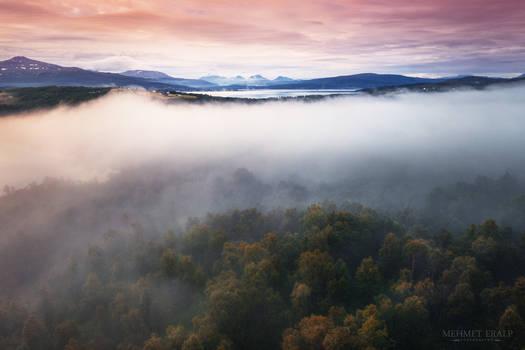 Foggy morning in Senja