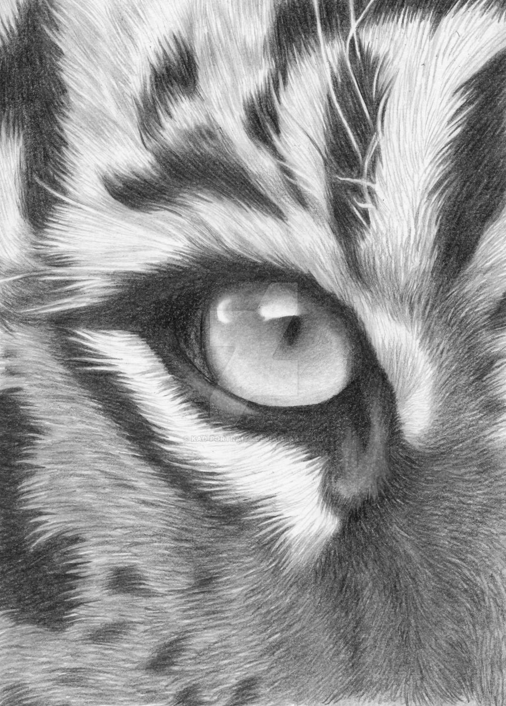 The Eye Of The Tiger By Kad-portraits On DeviantArt