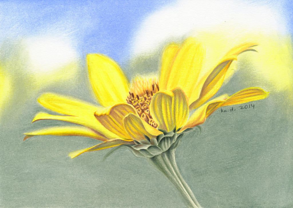 Wild Flower - colored pencil drawing.