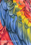 ACEO #25 - Feathers - colored pencil drawing