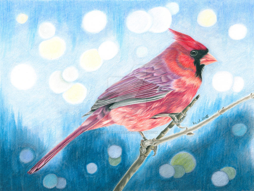 Red Cardinal Colored Pencil Drawing By Kad Portraits On Deviantart
