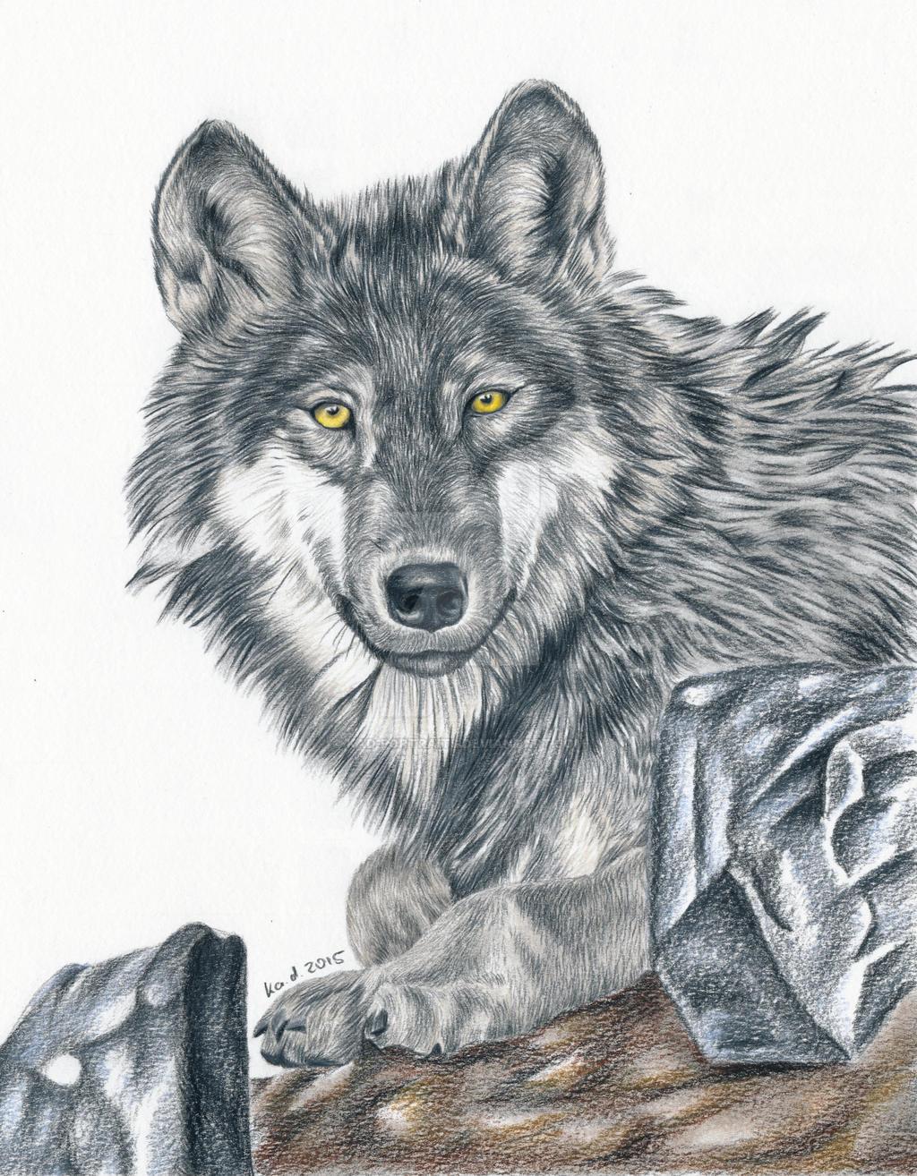Картинки волка карандашом прикольные
