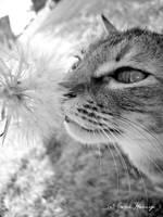 Freya by Lillith8810