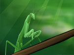 Emerald Hunter