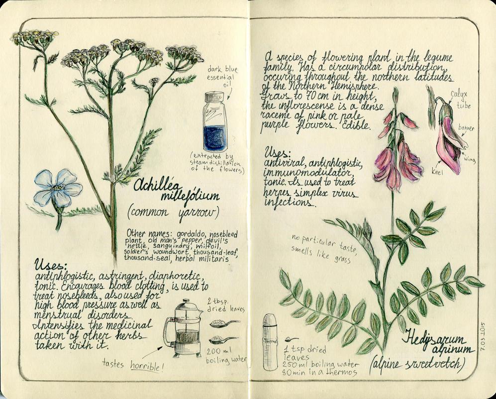 Herbs  by OlwenArt