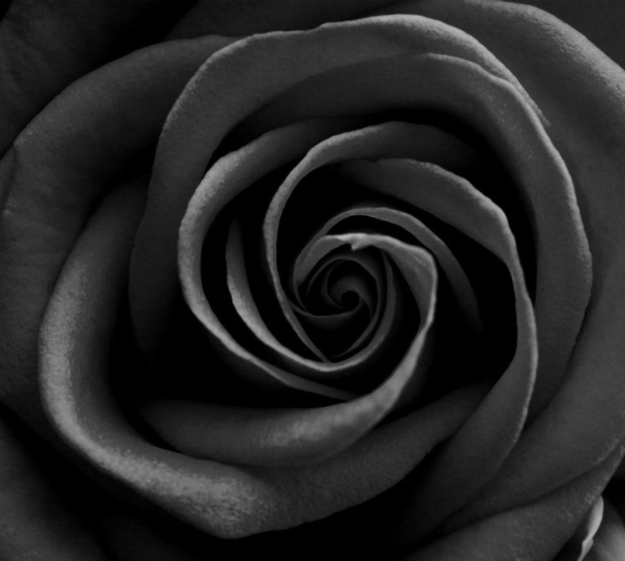 Black Rose Ͽ� Gostica: -black Rose- By Juu97 On DeviantArt