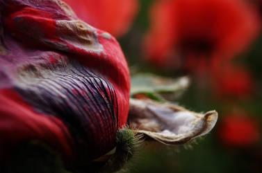 Poppy by Lina-Poe
