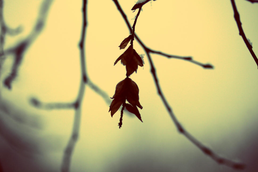 Winterbell by tortagel