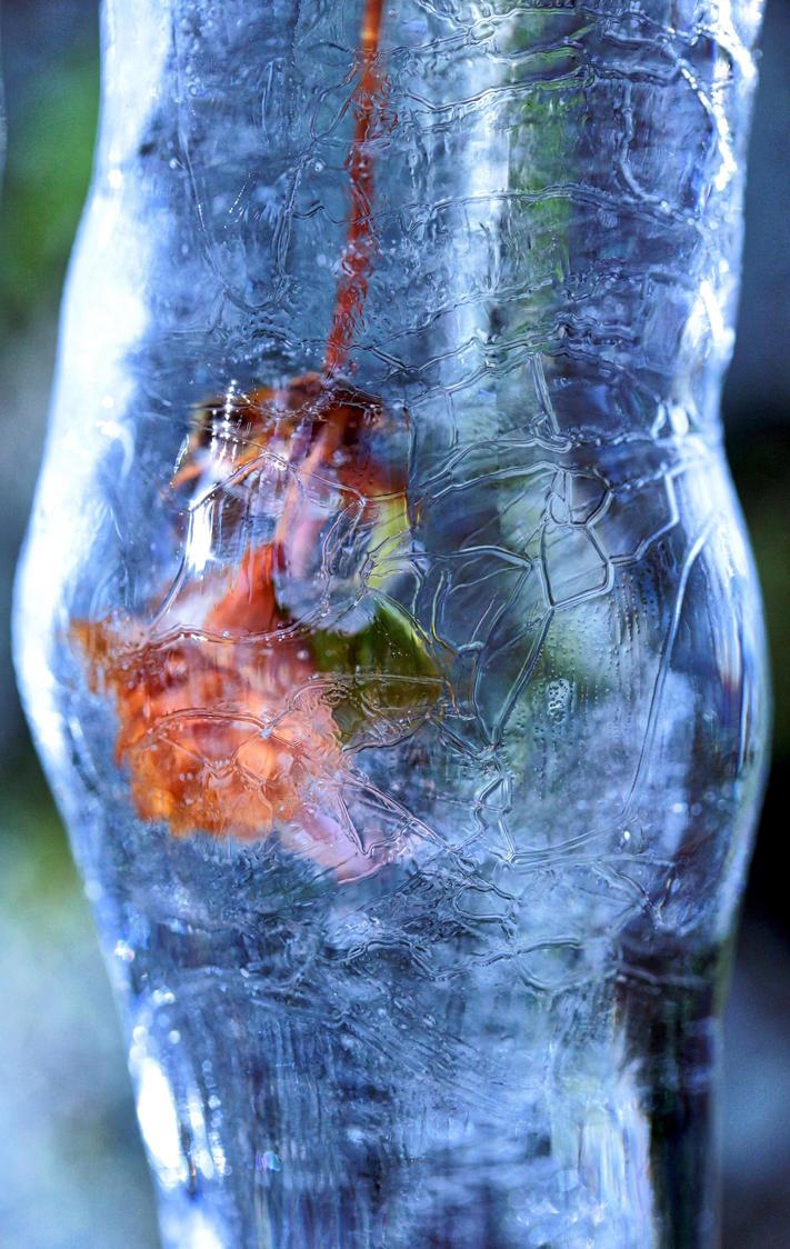Under Glas by tortagel
