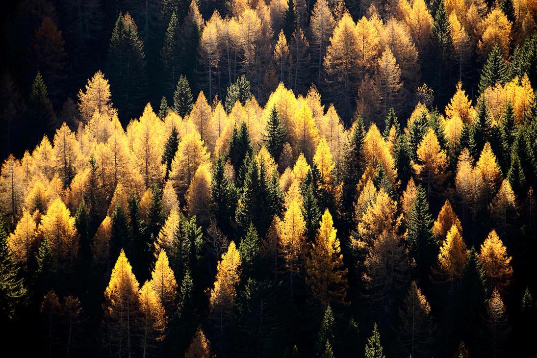 Foresta by tortagel