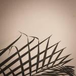Calligrammi by tortagel