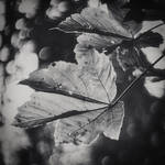 Foglie E Luce by tortagel