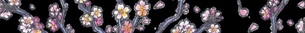 Cherry Blossom Divider [f2u]