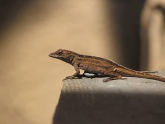 Little Lizard by darthmorsus
