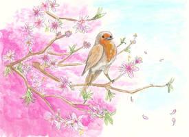 spring robin by keksimtee