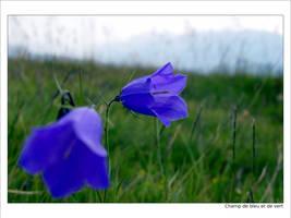 Champ de bleu et de vert by foukou