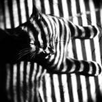 fake tiger by iizmu