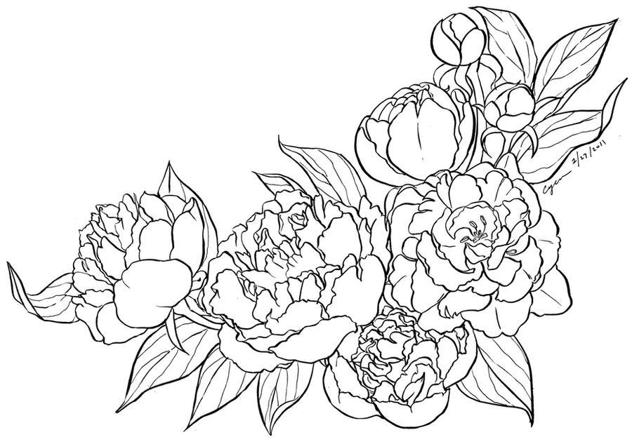 Peony Flower Line Drawing : Peony lineart by cyen on deviantart