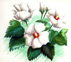 White on Green by cyen
