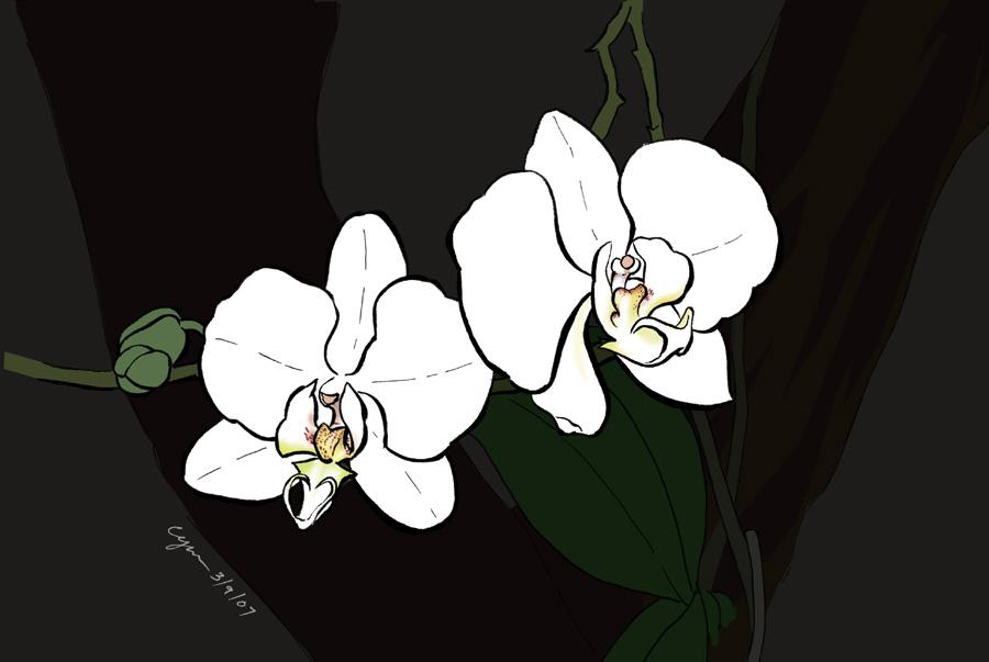 White on Black by cyen