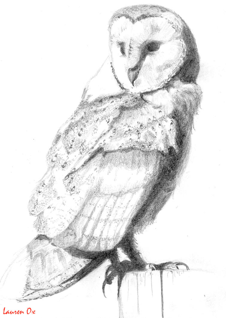 Barn owl- Sketch by YouAreABabeOx on DeviantArt