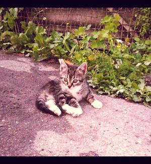 20110715::Naughty kittens 3