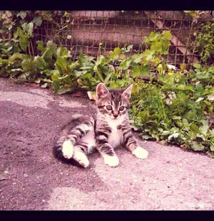 20110715::Naughty kittens 4