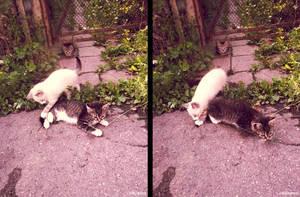 20110715::Naughty kittens 5