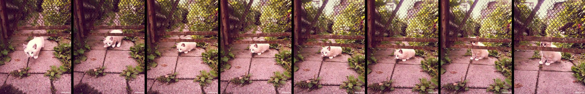 20110715::Naughty kittens 6