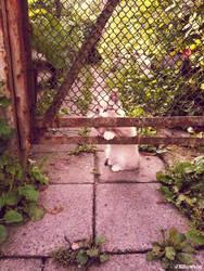 20110715::Naughty kittens 7