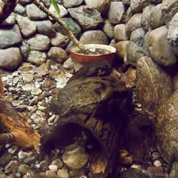20110726::Koenig zoo 2