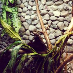 20110726::Koenig zoo 3
