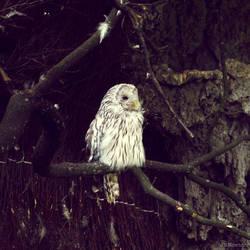 20110726::Koenig zoo 6