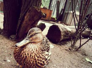 20110726::Koenig zoo 5