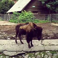 20110726::Koenig zoo 7