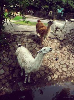 20110726::Koenig zoo 8