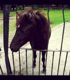 20110726::Koenig zoo 9