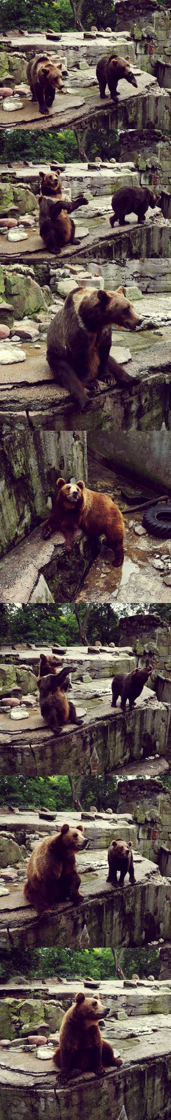 20110726::Koenig zoo 10