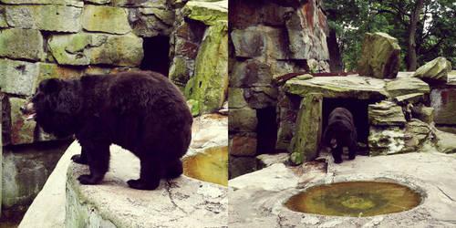 20110726::Koenig zoo 11