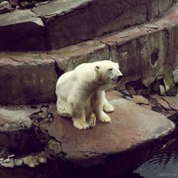 20110726::Koenig zoo 12