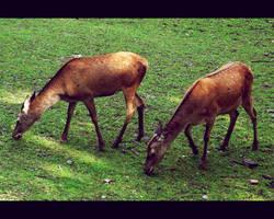 20110726::Koenig zoo 13