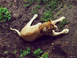 20110726::Koenig zoo 14