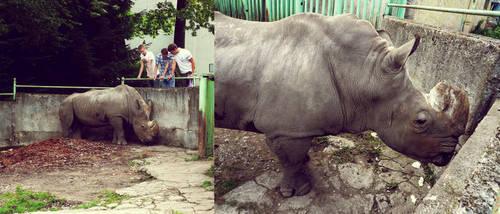 20110726::Koenig zoo 15