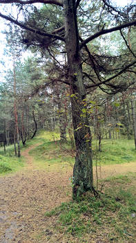 Curonian Spit :October: 6