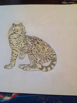 Ocolet cat drawing