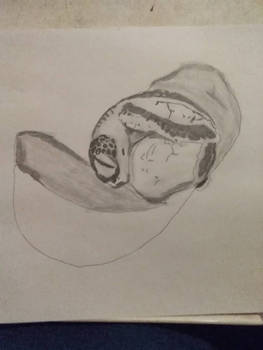 baby sea turtle hatching sketch