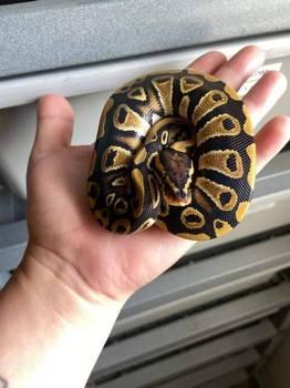 my new baby