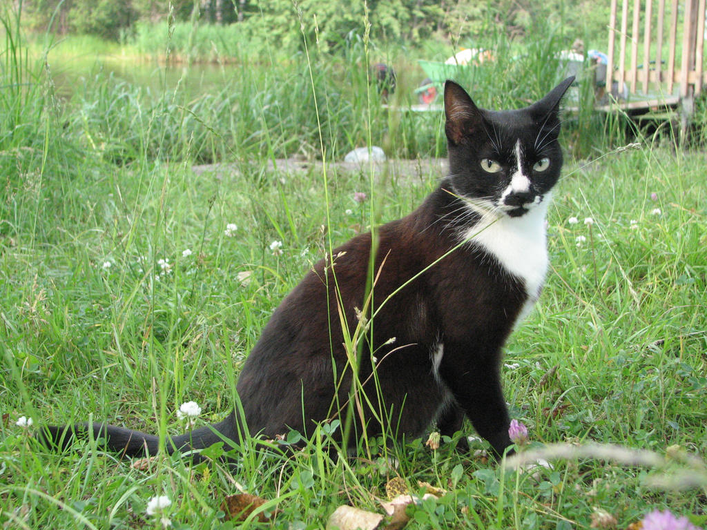 Stock: Black and white cat by Think-Outside-Of-Box on ...