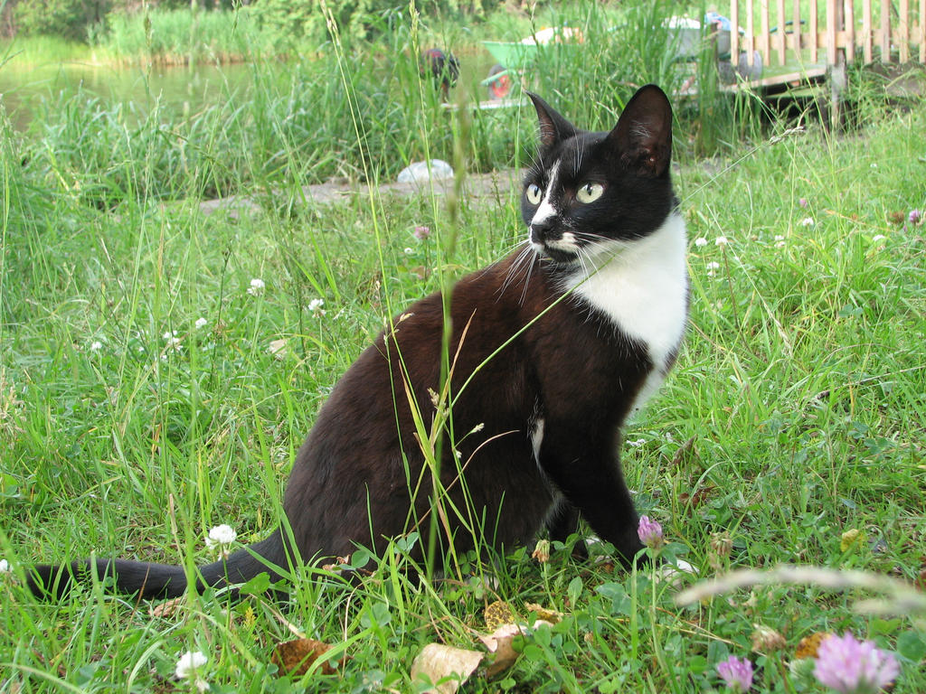 Stock: Black and white cat 3 by Think-Outside-Of-Box on ...