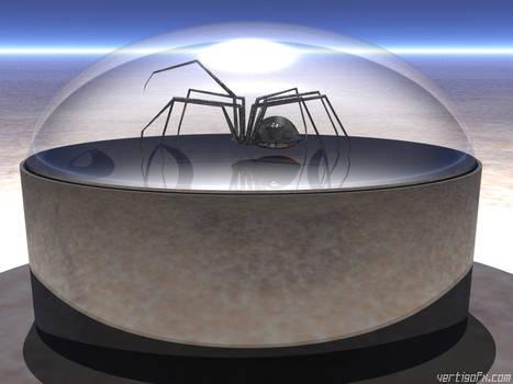 Black Widow Under Glass